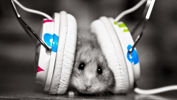 Mouse-Listening-Music