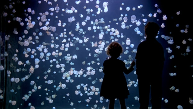 Children-Watching-Jellyfishes-04---NeilFisher_b7d00a61-5056-b3a8-49fa75679c2ae81e