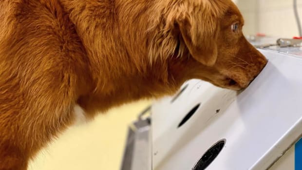 thumb_1024x663_dogs-sniffing-covid