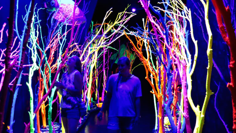 O.penVAPE's Cannabis-Inspired Festival Features Immersive Art Sponsored by Meow Wolf