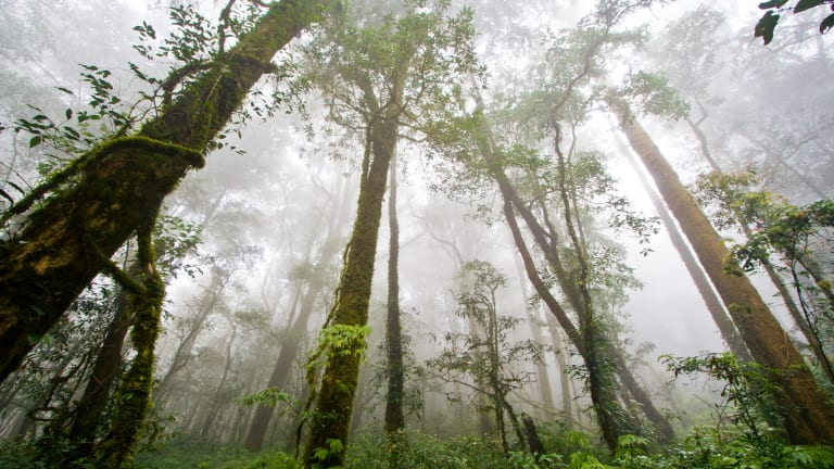 What If You Could Dance to Save the Rainforest? Now You Can