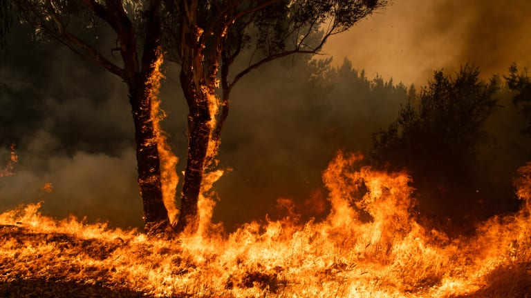 Australian Artists Come Together for Bushfire Fundraiser MAKE IT RAIN