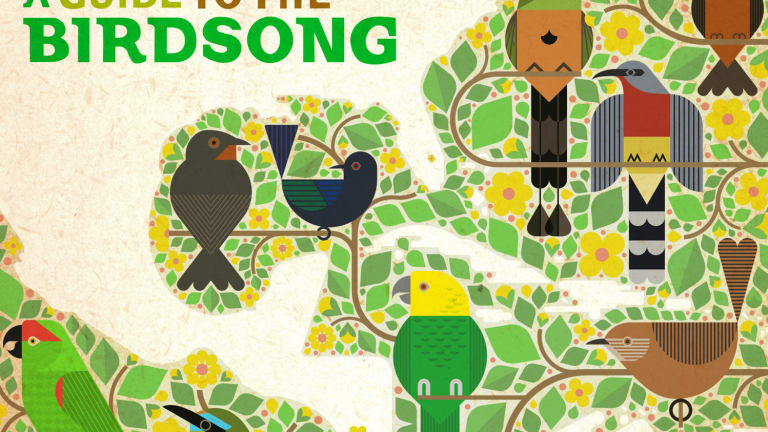 This Electronic Music Album Samples Endangered Songbirds to Raise Awareness of Conservation
