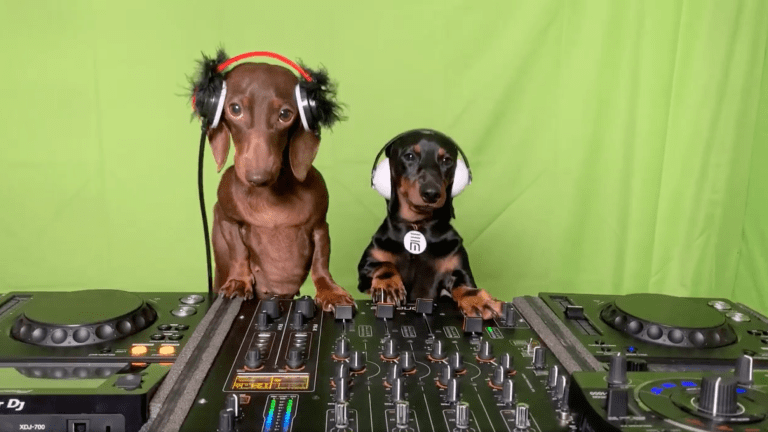 Celebrate National DJ Day With Freddie and Frida, the DJing Dachshunds