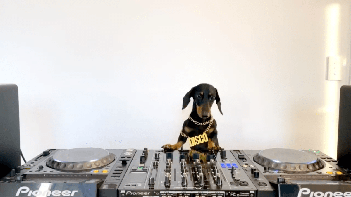 Here Is a DJing Dog, Courtesy of Defected Records