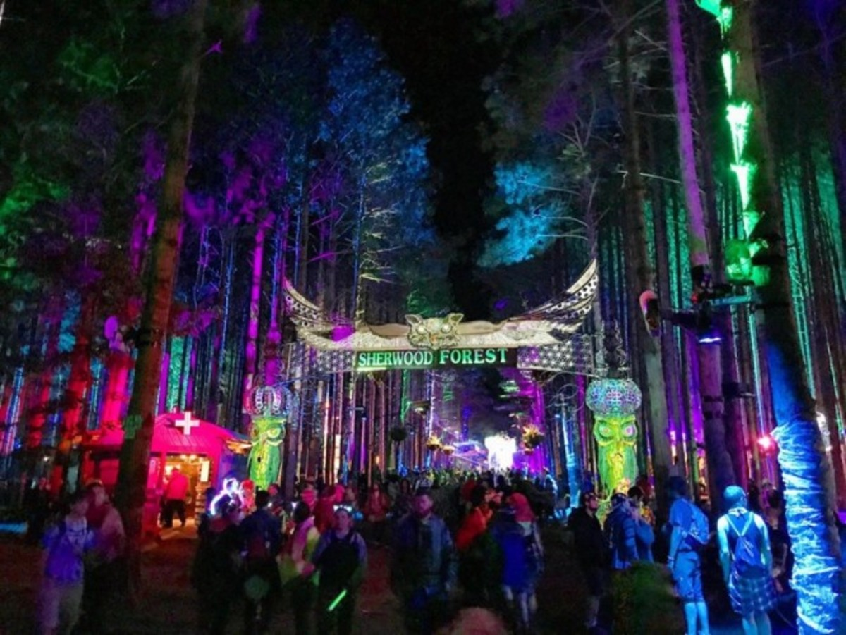Sherwood Forest at night