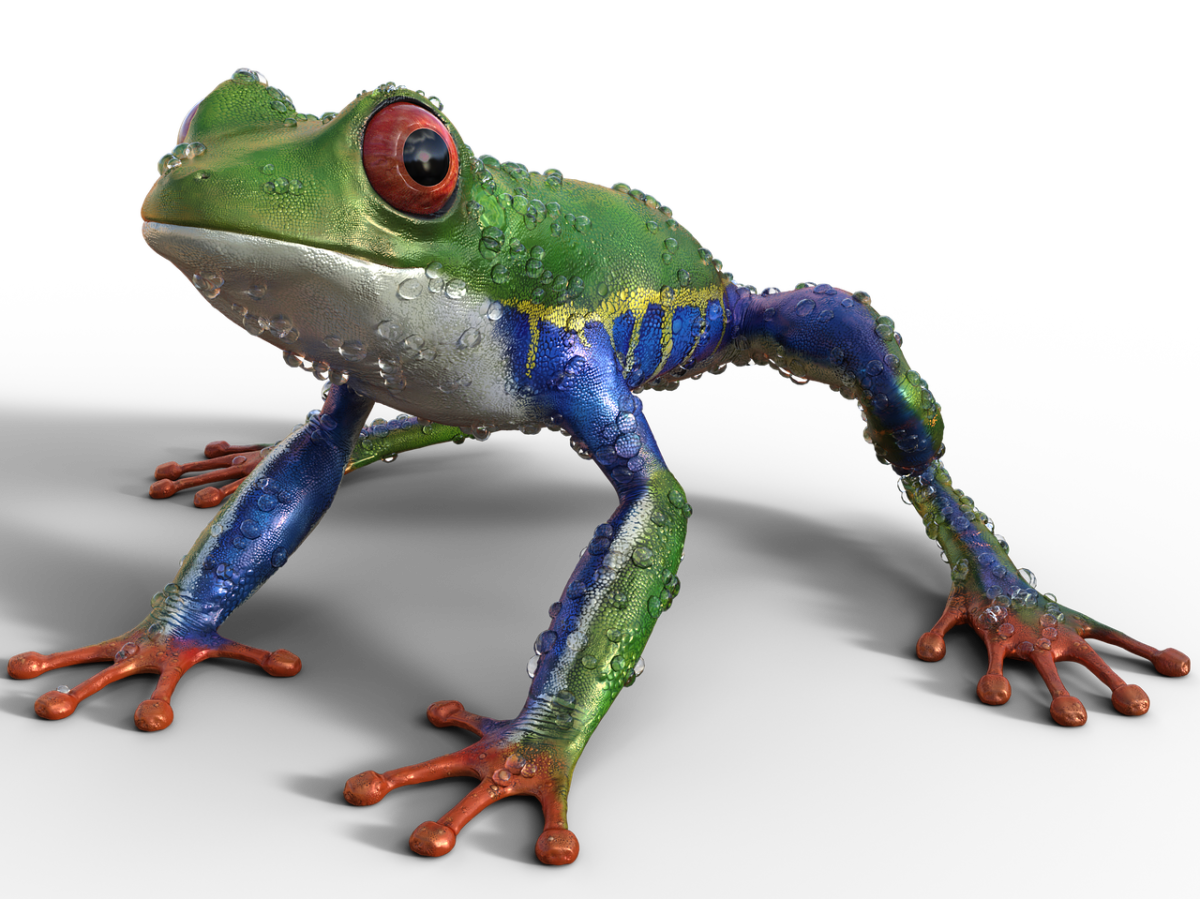 3d render red eyed tree frog