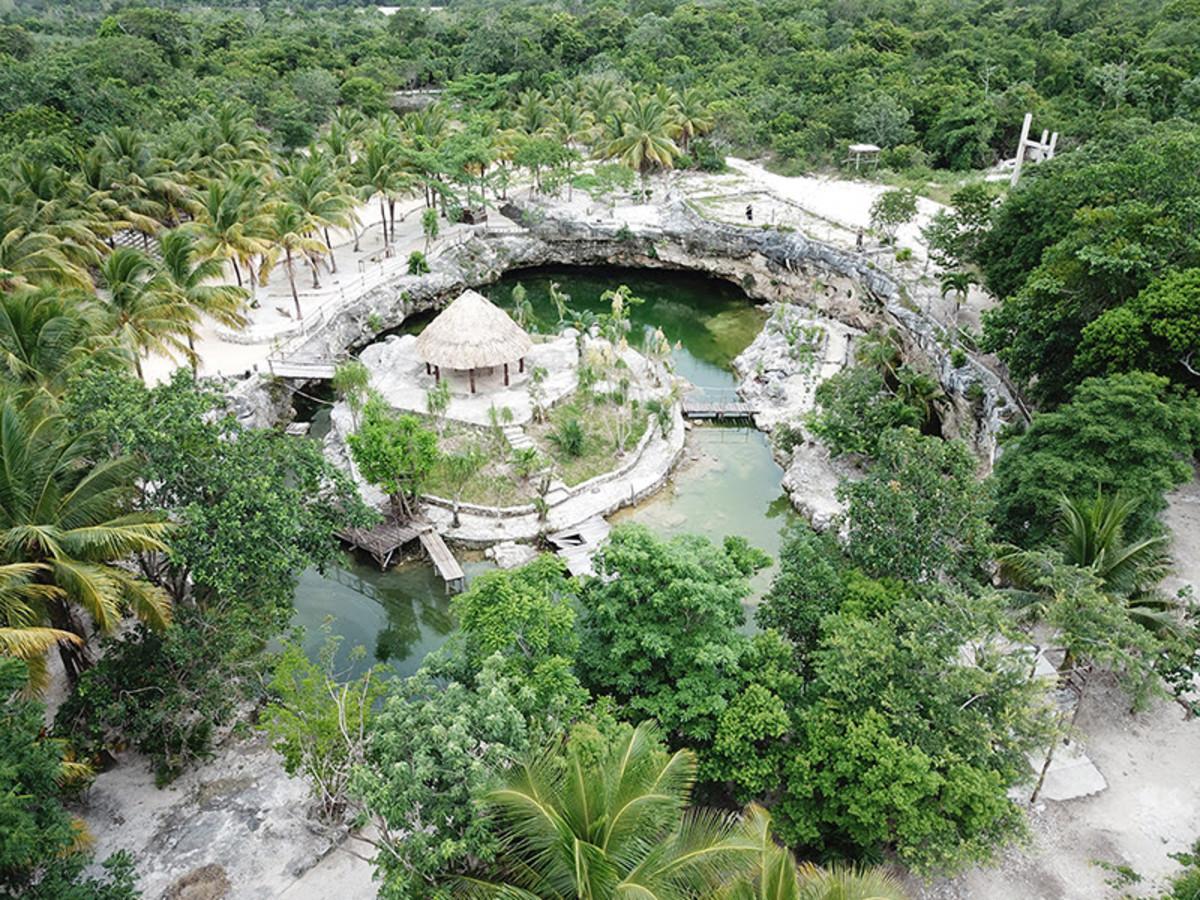 Cenote Casa Tortuga overhead rainforest canopy shot.